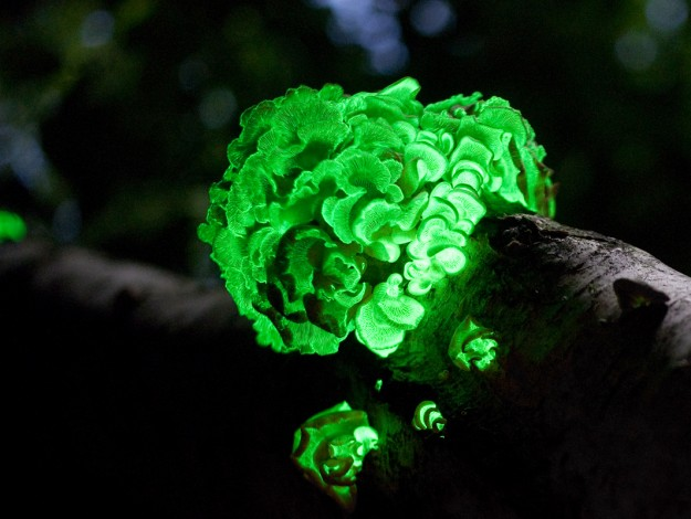 glow in the dark places in india