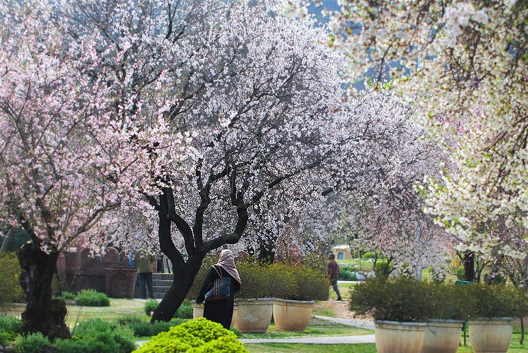 Kashmir Spring Season