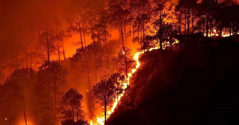 Odisha Similipal Tiger Reserve Fire