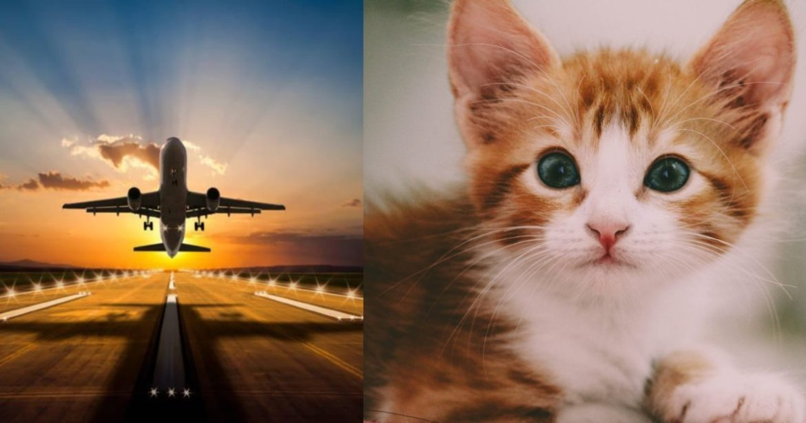 Cat Attacks Pilot Sudan Plane