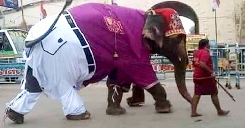 Elephant Wearing Shirt Pants