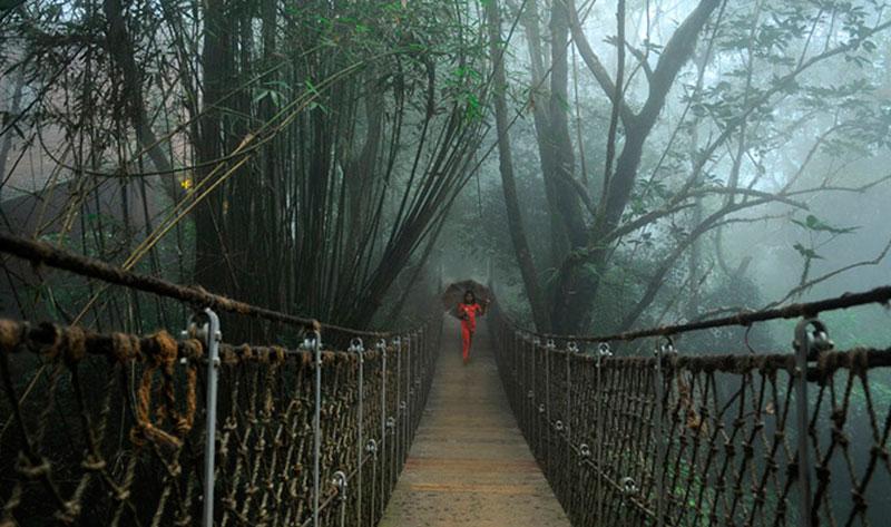 Tree House Kerala Streams