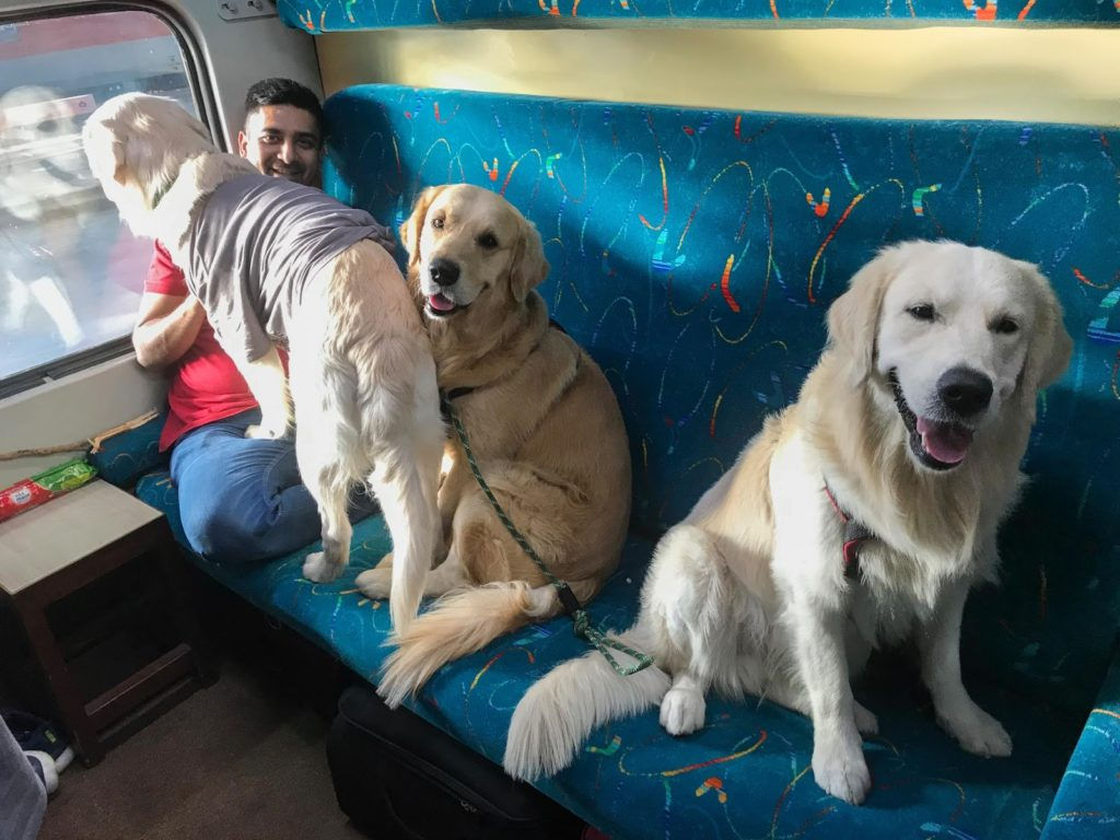 Igloo Himalayas Mountains Dogs