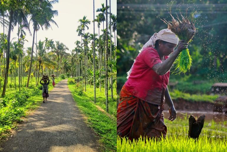 Kerala Agriculture Tourism