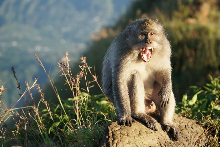 Monkey Travelled Karnataka Revenge